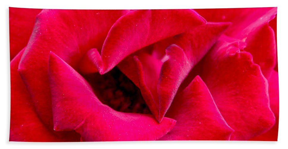 Red Beach Towel featuring the photograph A Close Look by Dean Triolo