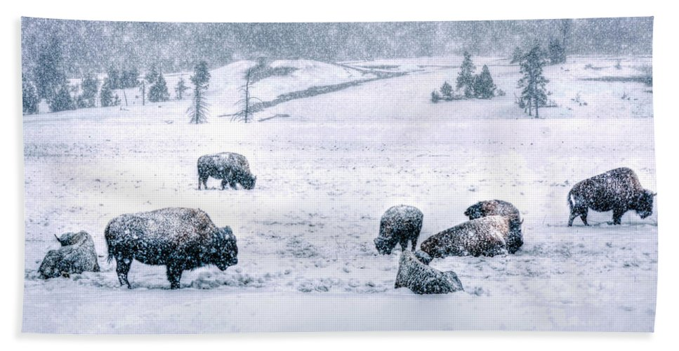 Bison Beach Towel featuring the photograph A Cold Winter's Day by Don Mercer