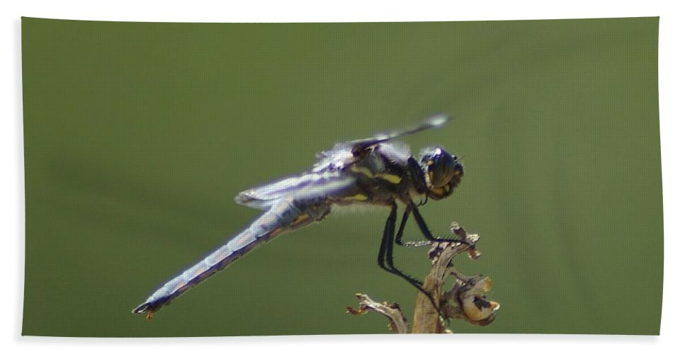 Dragonflies. Perched Dragonflies Beach Towel featuring the photograph A Dragon Fly Contemplating by Jeff Swan
