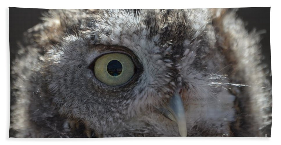 Rescue Beach Towel featuring the photograph A Eye On You by Jodie Sims