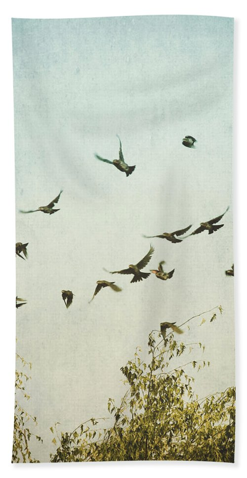 Birds Beach Towel featuring the photograph A Feeling Of Change by Annie Bailey