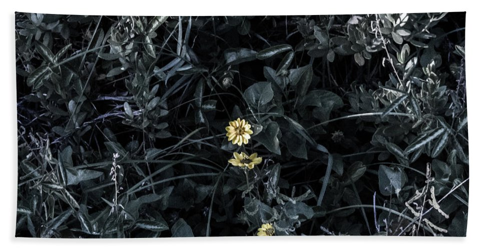 Flowers Beach Towel featuring the photograph A Flower's Fight by Anthony Sama
