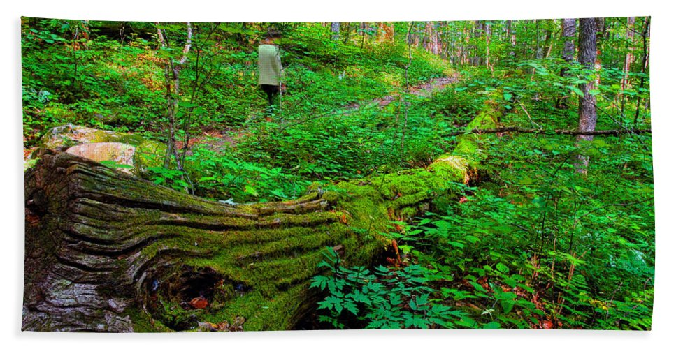 Hiking Beach Towel featuring the painting A Forest Stroll by David Lee Thompson