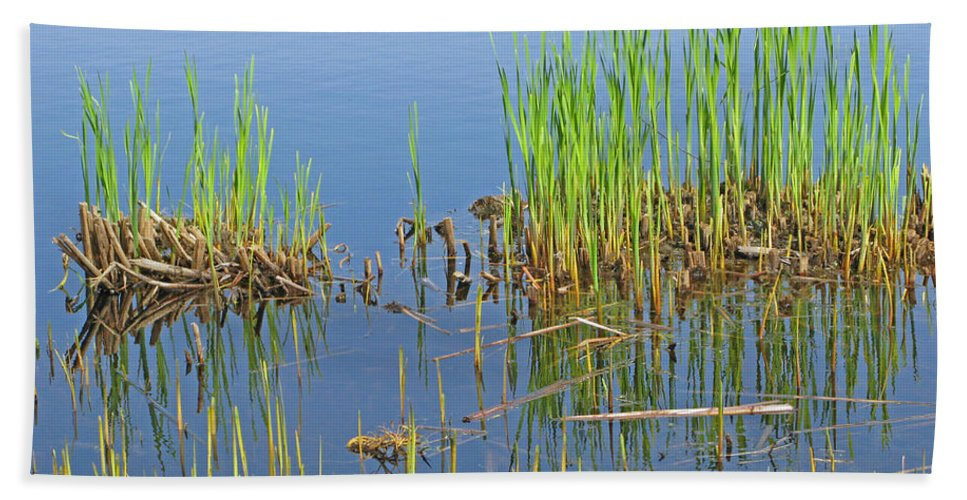 Spring Beach Towel featuring the photograph A Greening Marshland by Ann Horn