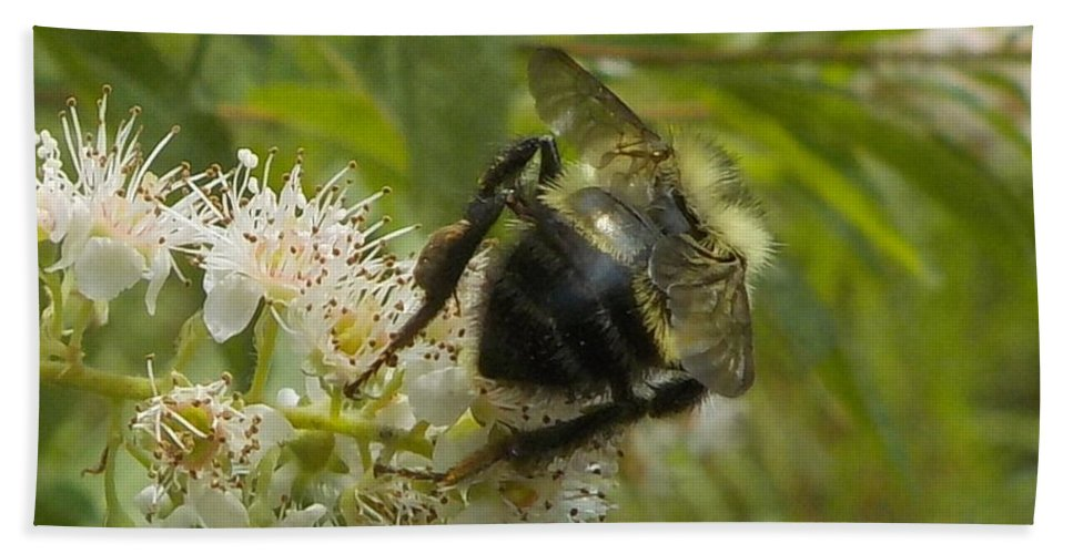 Insects Beach Towel featuring the photograph A Little Bee-hind by Lynn Sobecke
