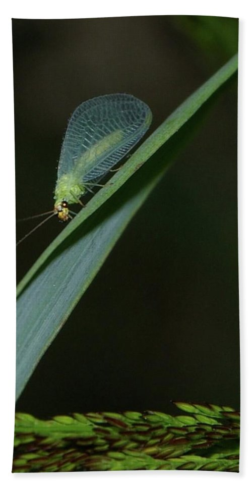 Insects Beach Towel featuring the photograph A Little Bug On A Grass Blade by Jeff Swan