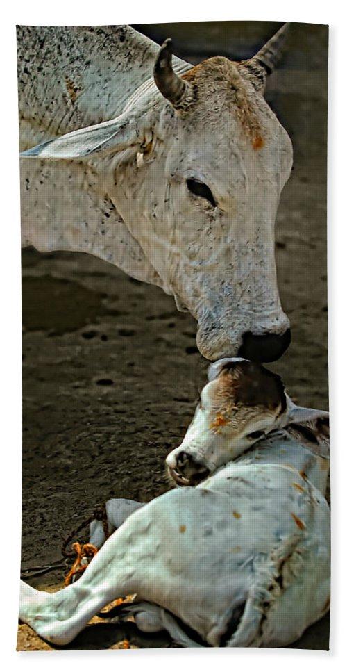 Cow Beach Towel featuring the photograph A Mother's Love by Steve Harrington