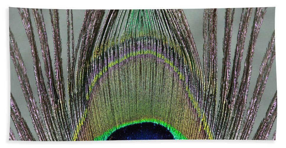 Peaock Beach Towel featuring the photograph A Peek At A Peacock Feather by Angela Murdock