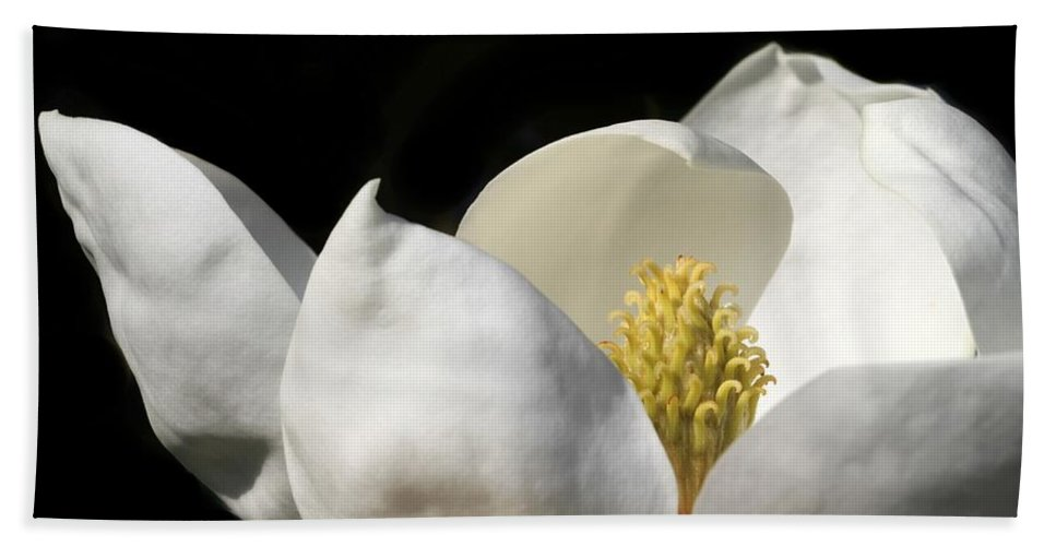 Magnolia Beach Towel featuring the photograph A Peek Inside A Magnolia by Sabrina L Ryan