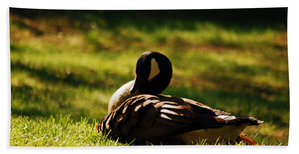 Goose Beach Towel featuring the photograph A Place To Rest by Lori Tambakis