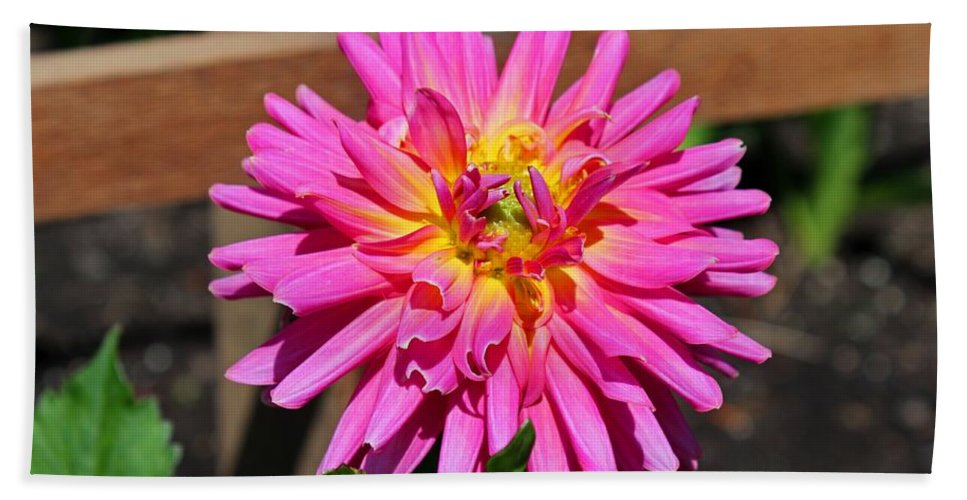 Dahlia Beach Towel featuring the photograph A Poignant Love Story by Michiale Schneider