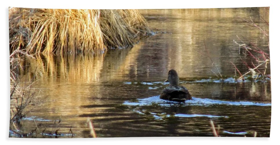 Ducks Beach Towel featuring the photograph A Quiet Morning Swim by William Tasker