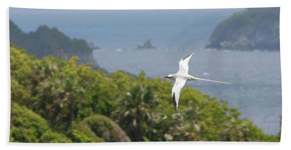 Tropicbird Beach Towel featuring the photograph A Red-billed Tropicbird (phaethon by John Edwards