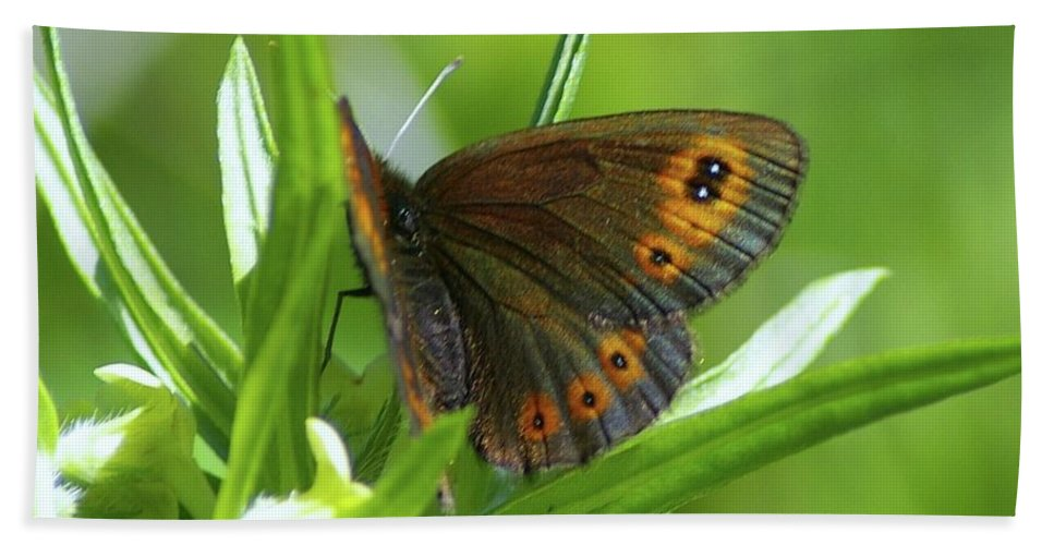 Butterflies Beach Towel featuring the photograph A Red Butterfly Perching by Jeff Swan