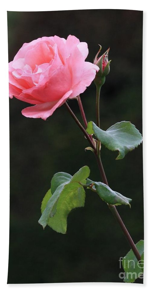 Pink Rose Beach Towel featuring the photograph A Rose For Rodin by Carol Groenen
