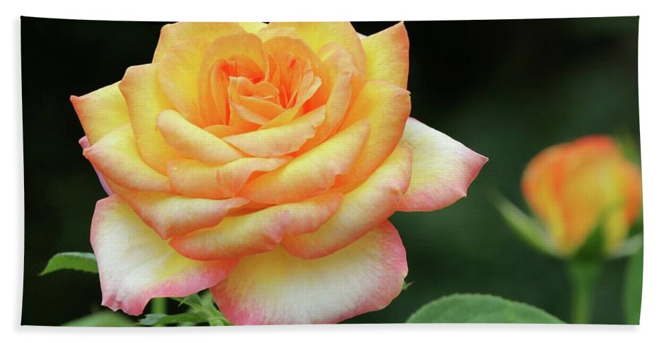 Rose Beach Towel featuring the photograph A Rose Is A Rose by Sabrina L Ryan