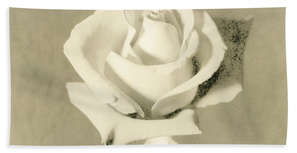 Rose Beach Towel featuring the photograph A Rose Of Alternate Processed by John Harmon