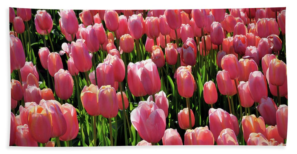 Tulip Beach Towel featuring the photograph A Sea Of Coral by Kimberly Berg-Dunlap