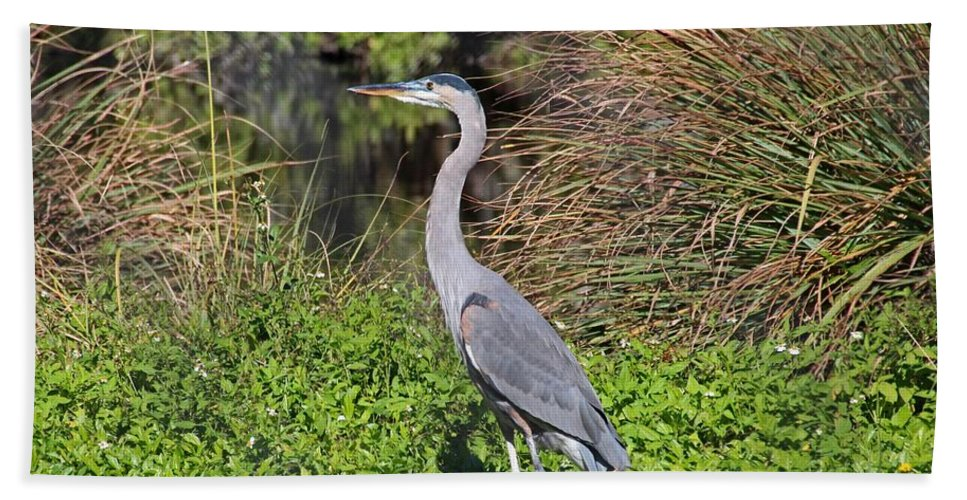 Heron Beach Towel featuring the photograph A Small Gamble by Michiale Schneider