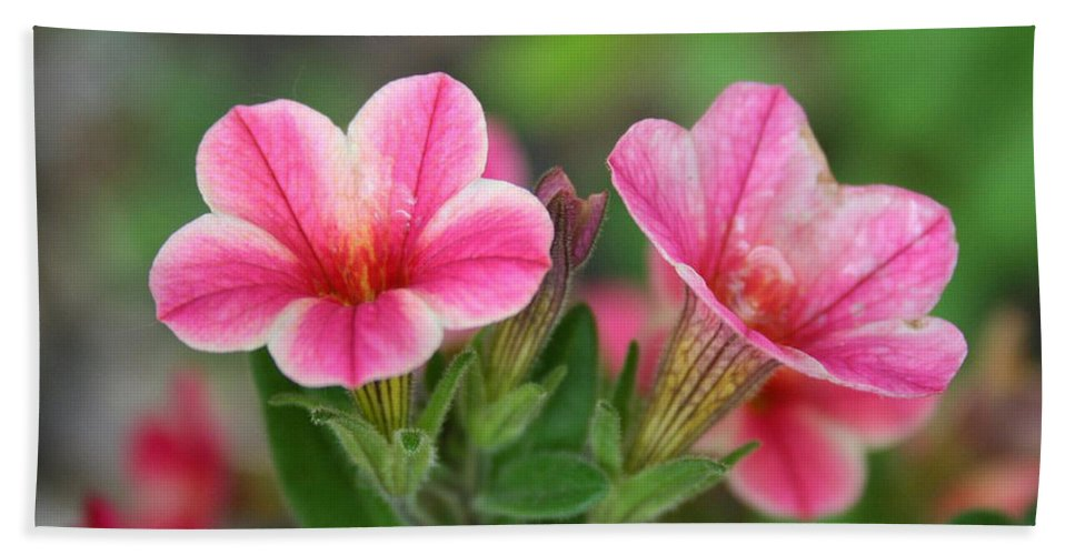 Flowers Beach Sheet featuring the photograph A Sunny Afternoon by Linda Sannuti