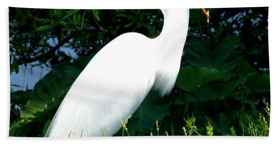 Egret Beach Towel featuring the photograph A Tough One To Swallow by J M Farris Photography