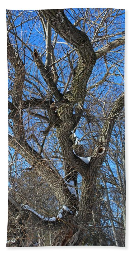 Tree Beach Towel featuring the photograph A Tree In Winter- Vertical by Michiale Schneider