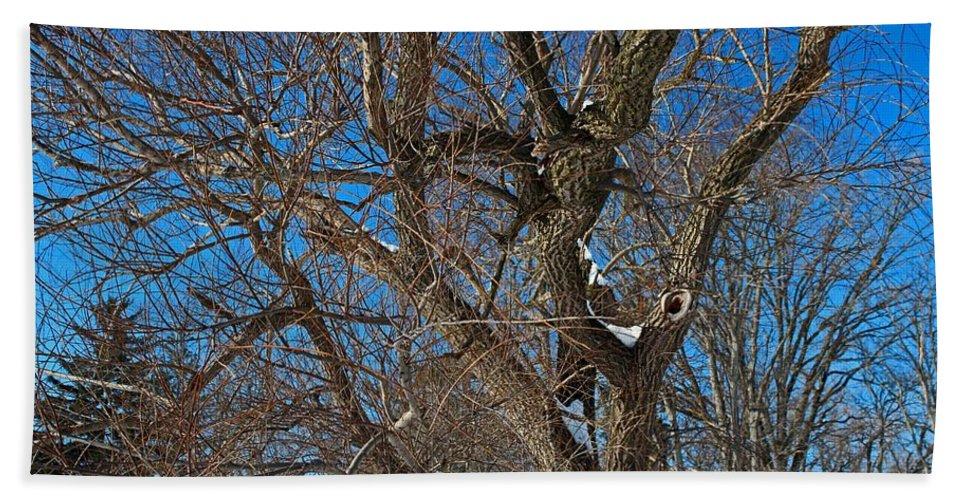 Tree Beach Towel featuring the photograph A Tree In Winter- Horizontal by Michiale Schneider