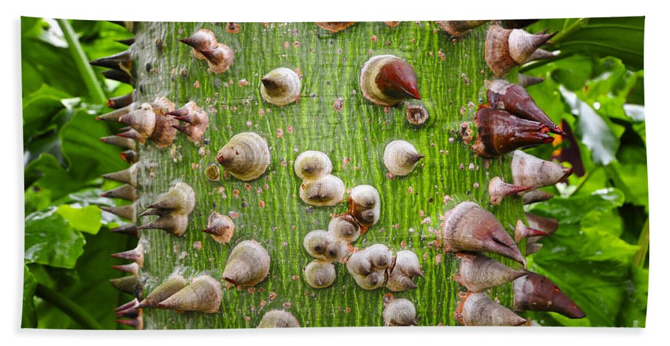 Ceiba Tree Beach Towel featuring the photograph A Trunk Of Thorns by David Lee Thompson