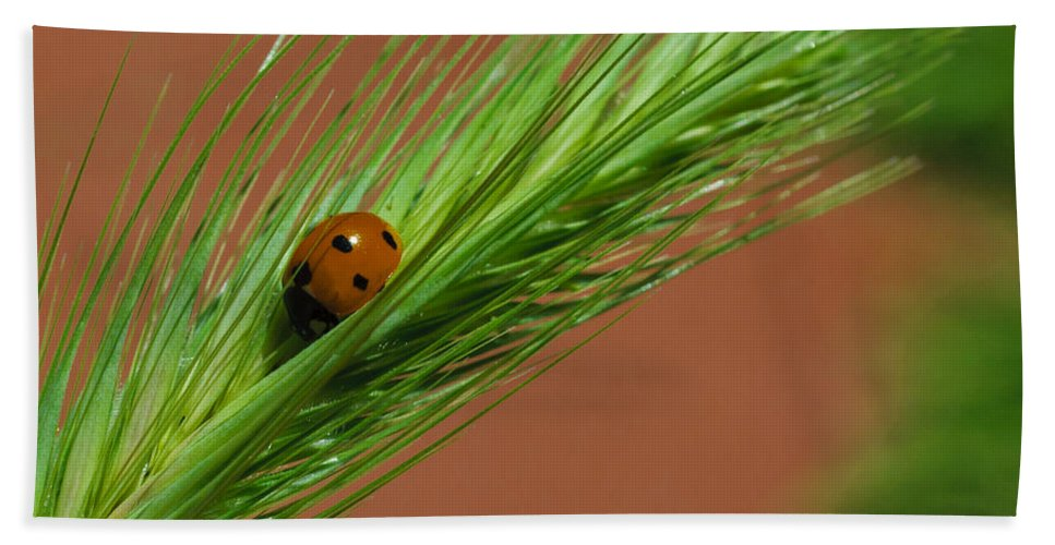 Ladybug Beach Towel featuring the photograph A Walk In The Tall Grass by Dennis Reagan