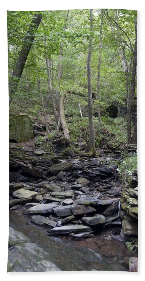 Woods Beach Towel featuring the photograph A Walk In The Woods by Steven Natanson