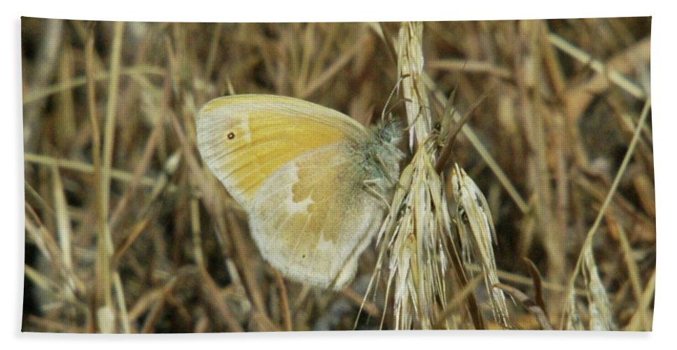 Beach Towel featuring the photograph A Yellow Moth by Jeff Swan