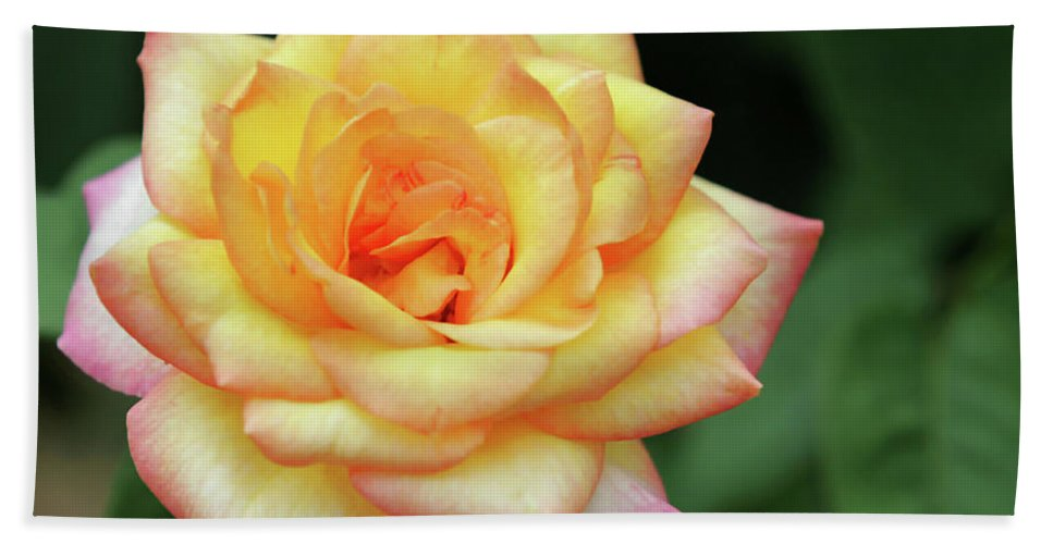 Rose Beach Towel featuring the photograph A Yellow Rose by Sabrina L Ryan