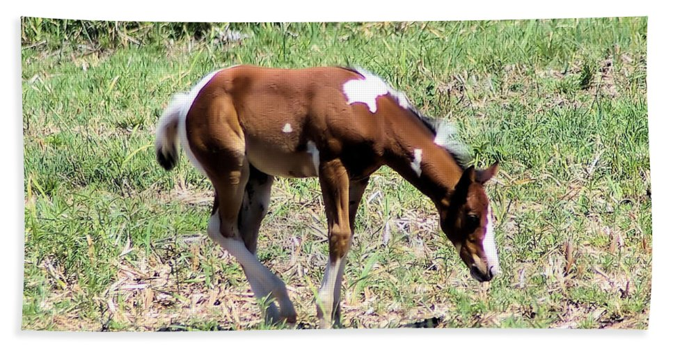 Horses Beach Towel featuring the photograph A Young Painted Colt by Jeff Swan