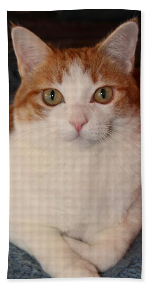 Cat Beach Towel featuring the photograph Abner 1 by Michiale Schneider