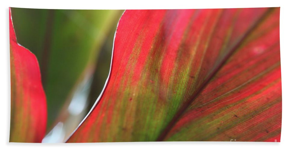 Pink Beach Sheet featuring the photograph Abstract Leaves by Nadine Rippelmeyer