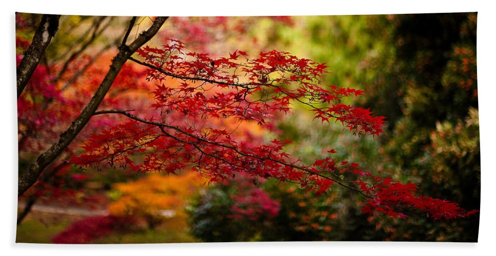 Acer Beach Towel featuring the photograph Acer Colors by Mike Reid