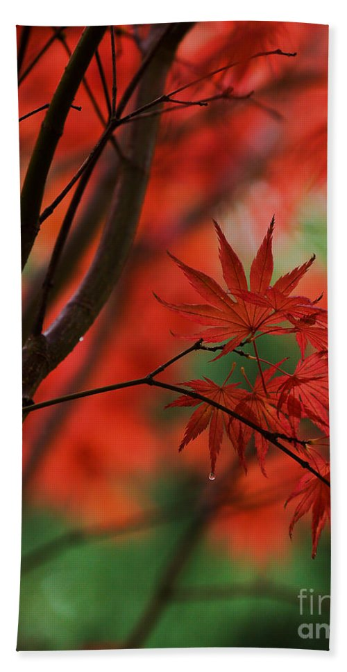 Acer Beach Towel featuring the photograph Acer Fanfare by Mike Reid
