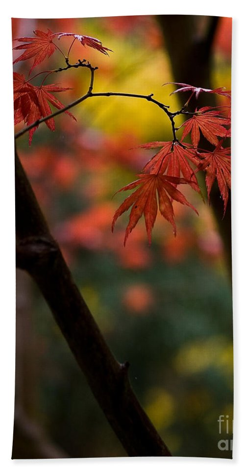 Acer Beach Towel featuring the photograph Acer Finish by Mike Reid