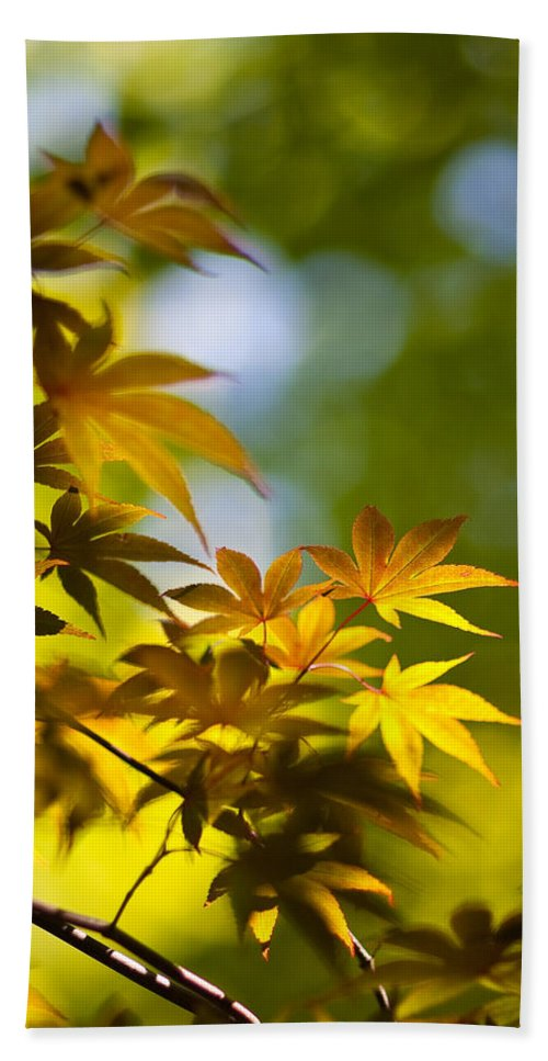 Japanese Maples Beach Towel featuring the photograph Acer Glow by Mike Reid