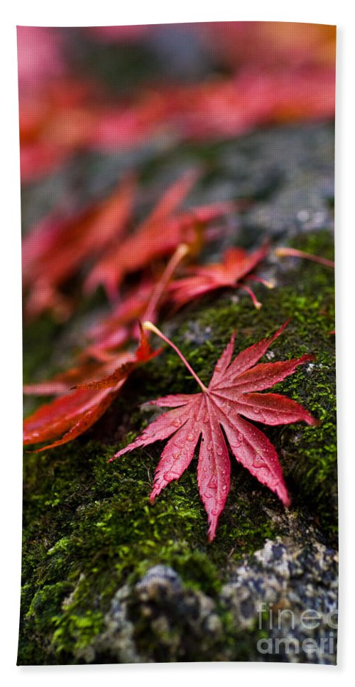 Acer Beach Towel featuring the photograph Acers Fallen by Mike Reid