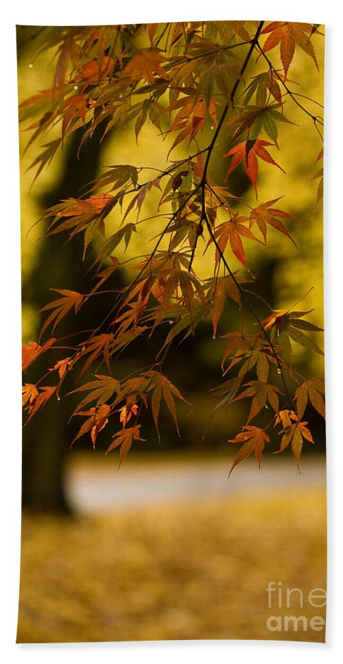 Acer Beach Towel featuring the photograph Acers Turning by Mike Reid