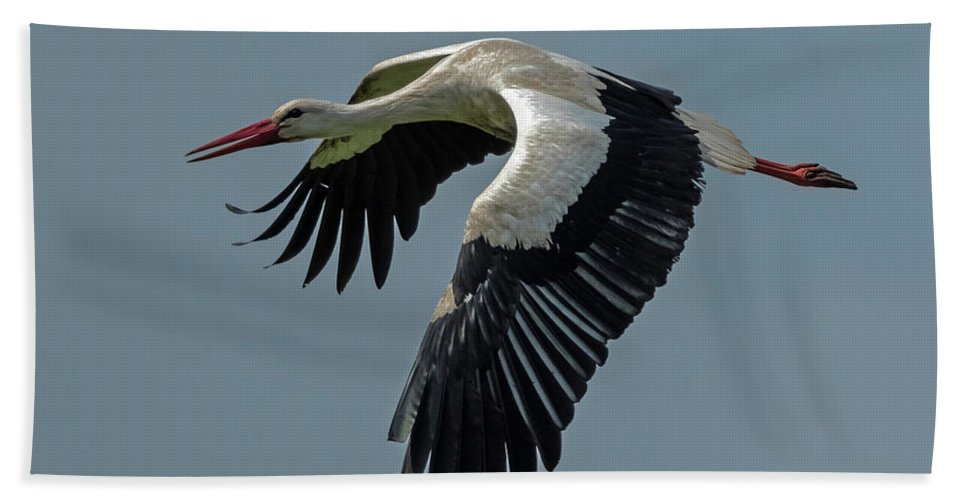Wildlife Beach Towel featuring the photograph Adebar Air by Hans Zimmer