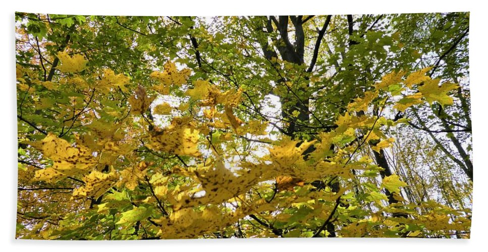 Spencer Gorge Ontario Autumn Leaves Yellow Trees Beach Towel featuring the photograph Adrift by The Sangsters