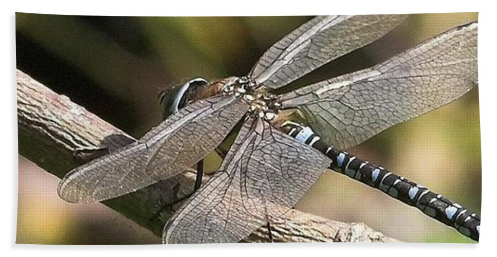 Dragonfly Beach Towel featuring the photograph Aeshna Juncea - Common Hawker taken At by John Edwards