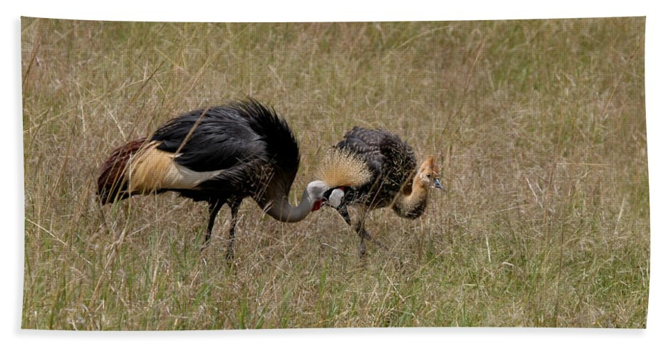 Grey Crown Crane Beach Towel featuring the photograph African Grey Crowned Crane With Chick by Joseph G Holland