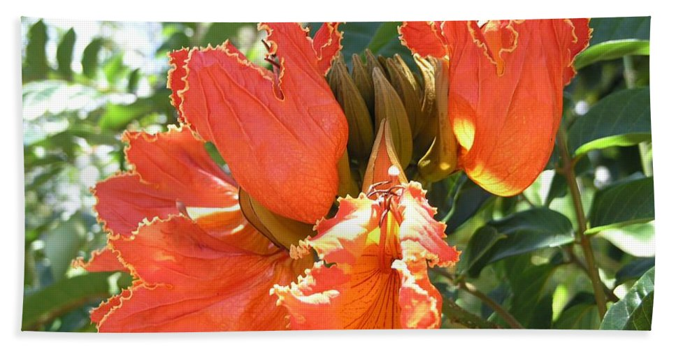 African Tulip Beach Towel featuring the photograph African Tulips by Mary Deal