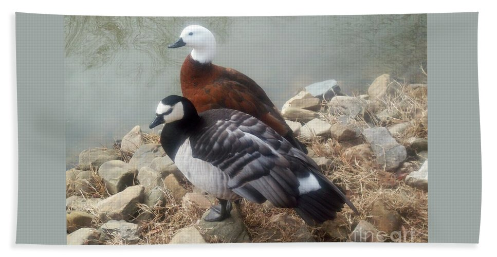 Ducks Beach Towel featuring the photograph Afternoon Delight by Sandra McClure