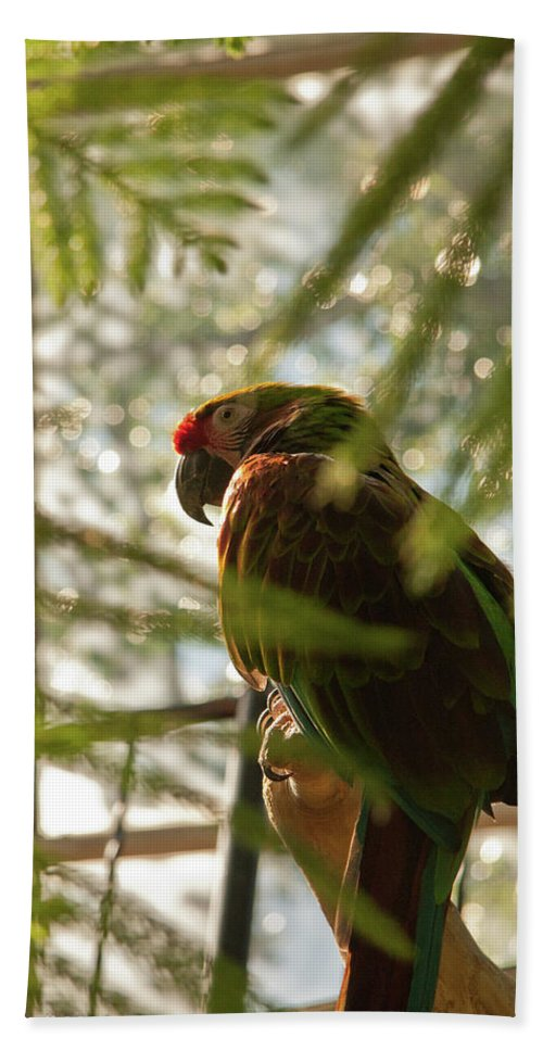 Bird Beach Towel featuring the photograph Afteroon Snooze by Deanna Paull