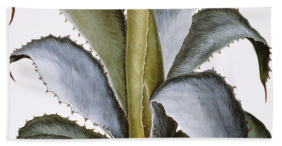 1613 Beach Towel featuring the photograph Agave, 1613 by Granger