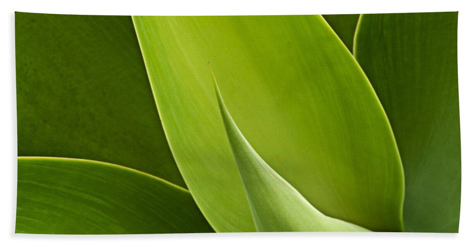 Green Beach Towel featuring the photograph Agave by Heiko Koehrer-Wagner